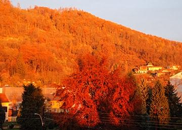 Herbstlich rötlicher Wald