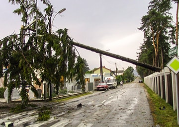Ein umgefallener Baum, der die Straße kreuzt